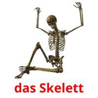 das Skelett picture flashcards