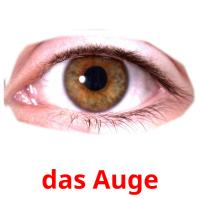 das Auge picture flashcards