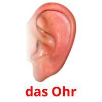 das Ohr picture flashcards