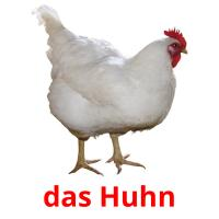 das Huhn picture flashcards