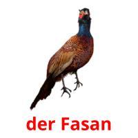der Fasan picture flashcards