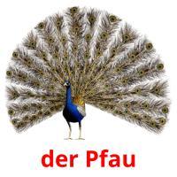 der Pfau picture flashcards