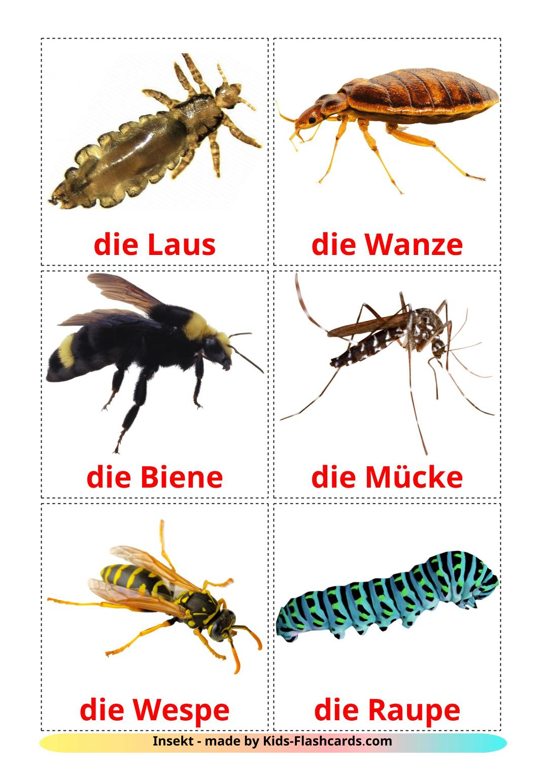 Insects - 23 Free Printable german Flashcards