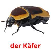 der Käfer picture flashcards