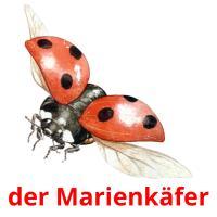 der Marienkäfer picture flashcards