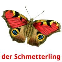 der Schmetterling picture flashcards