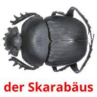 der Skarabäus picture flashcards