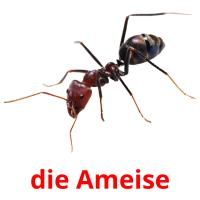 die Ameise picture flashcards