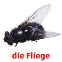 die Fliege picture flashcards
