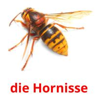 die Hornisse picture flashcards