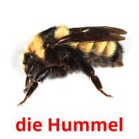 die Hummel picture flashcards