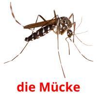 die Mücke picture flashcards