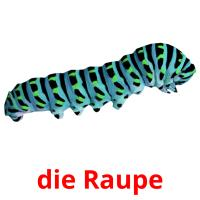 die Raupe picture flashcards
