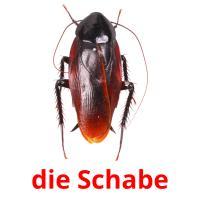 die Schabe picture flashcards