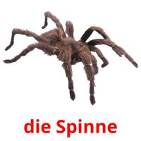 die Spinne picture flashcards