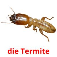 die Termite picture flashcards