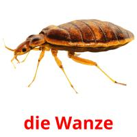 die Wanze picture flashcards