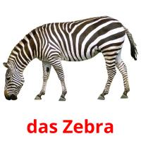 das Zebra picture flashcards