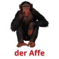 der Affe picture flashcards