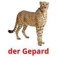 der Gepard picture flashcards
