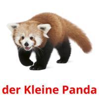 der Kleine Panda picture flashcards