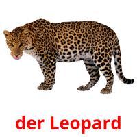 der Leopard picture flashcards