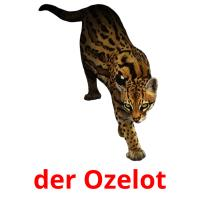der Ozelot picture flashcards