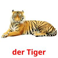der Tiger picture flashcards