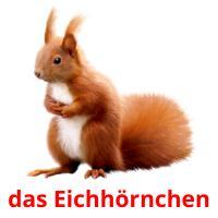 das Eichhörnchen picture flashcards
