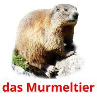 das Murmeltier picture flashcards