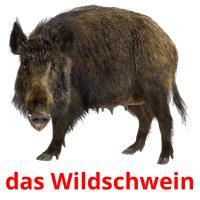 das Wildschwein picture flashcards