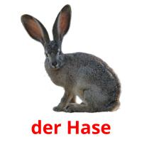 der Hase picture flashcards