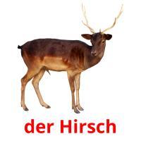 der Hirsch picture flashcards