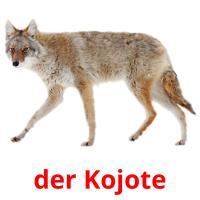 der Kojote picture flashcards