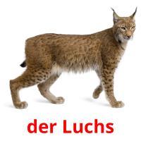 der Luchs picture flashcards