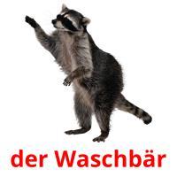 der Waschbär picture flashcards
