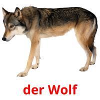 der Wolf picture flashcards