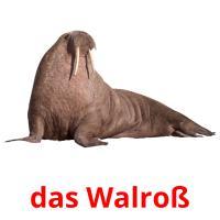 das Walroß picture flashcards