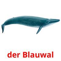 der Blauwal picture flashcards