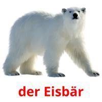 der Eisbär picture flashcards