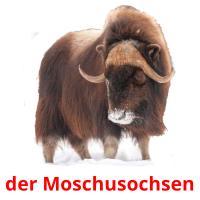 der Moschusochsen picture flashcards