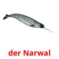 der Narwal picture flashcards
