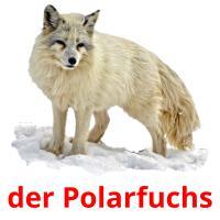 der Polarfuchs picture flashcards