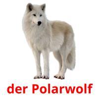 der Polarwolf picture flashcards