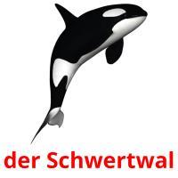 der Schwertwal picture flashcards