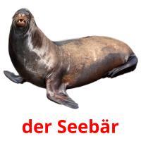 der Seebär picture flashcards