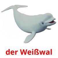 der Weißwal picture flashcards