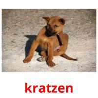 kratzen picture flashcards