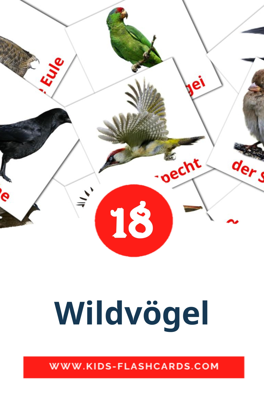 17 Die Wildvögel  Picture Cards for Kindergarden in german