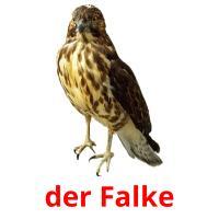 der Falke picture flashcards